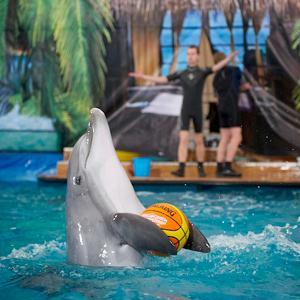 Дельфинарии, океанариумы Заинска