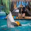Дельфинарии, океанариумы в Заинске